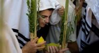 Заповеди «четырех видов растений»